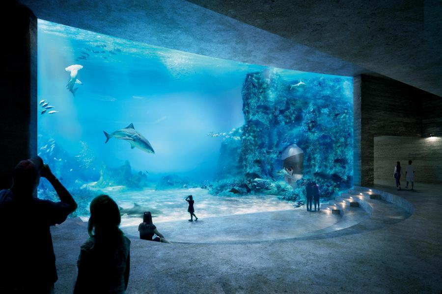 Siegerprojekt «Seacliff» (Boltshauser Architekten): Hauptattraktion des Basler Ozeaniums wird das grosse Raubfischbecken mit knapp 9m Wasserstand. (Visualisierung: Projektverfasser)